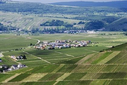モーゼル地方の葡萄畑