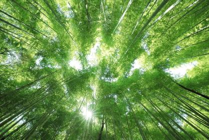 竹林で見上げた空