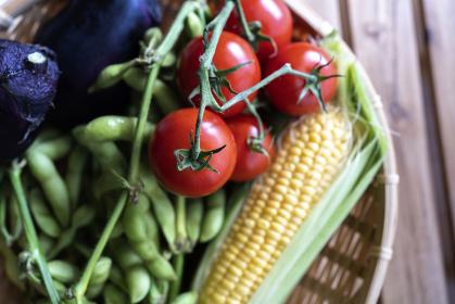 もぎたて新鮮な夏野菜(枝豆、トマト、とうもろこし、水ナス)