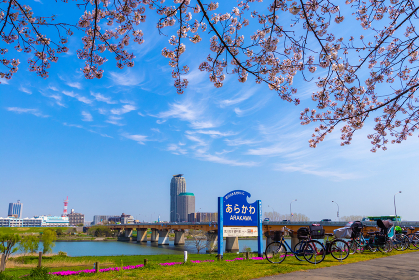 あらかわ 看板と桜