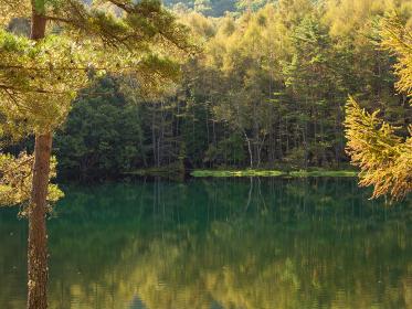 秋の朝の御射鹿池 9月末
