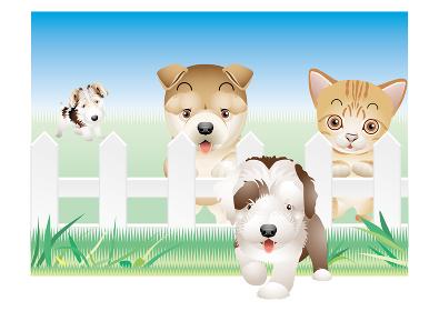 自然豊かな場所の柵の周辺で犬と猫