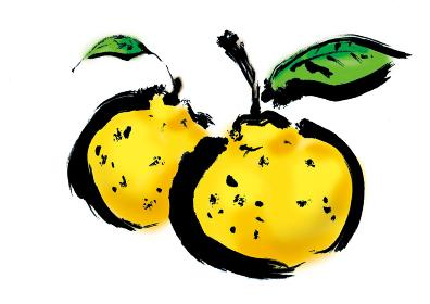 手描きの柑橘系果物の柚子の和風イラスト 筆書きの太い線のフルーツ