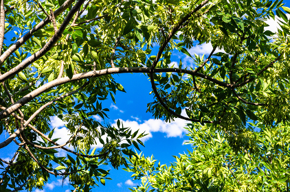 Leaves of trees and blue sky background