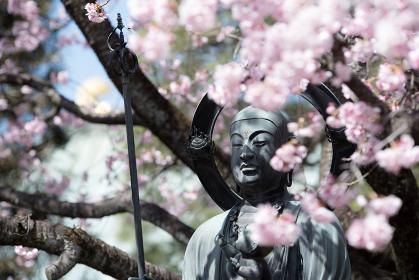 安行桜 クローズアップ