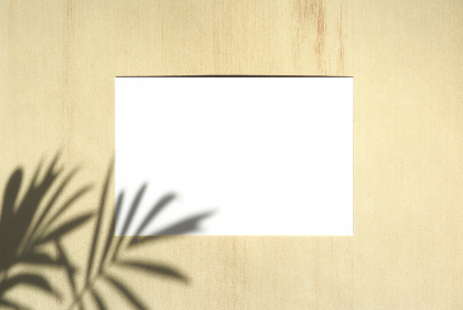 テーブルヤシの影と白いカード 12