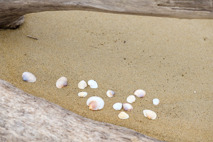 砂浜の流木と貝殻
