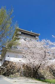 小倉城と桜の風景 福岡県北九州市