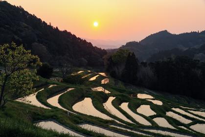 大山千枚田の日の出