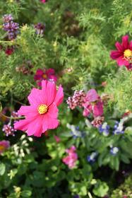 野原の赤い花