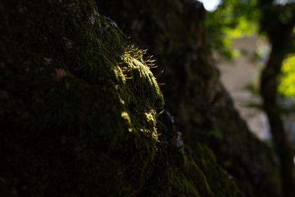 光に照らされた苔の壁
