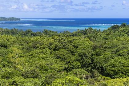 パラオ バベルダオブ島 ジャングルと海