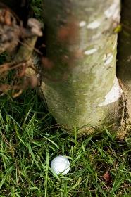 茂みの中のゴルフボール