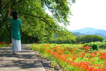 川沿いの遊歩道で土手に咲く彼岸花と手を振る一人の女性