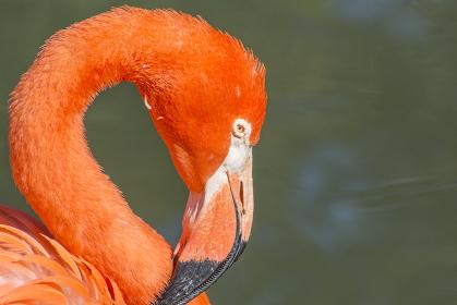 仙台の八木山動物園のフラミンゴ