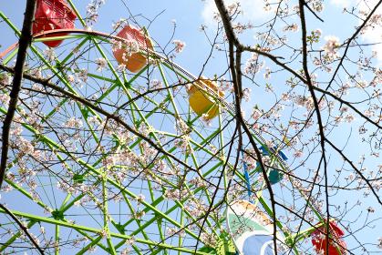 迫力のある城山公園の観覧車と春の桜