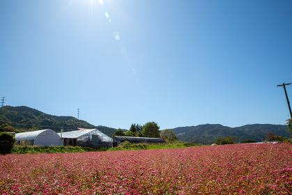 長野県阿南町 赤蕎麦の農場