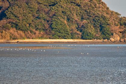 福岡県北九州市 曽根干潟に遊ぶ野鳥