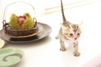 和風イメージ栗と子猫