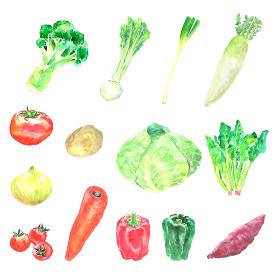水彩で描いた野菜のイラストセット