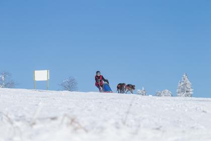 sled dog alpine sled dog race women forest 2015