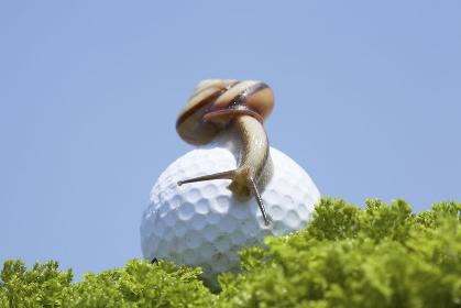 ゴルフボールとカタツムリ