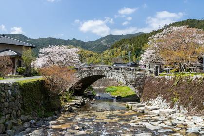 野鳥川に架かる石造秋月の目鏡橋と桜の風景