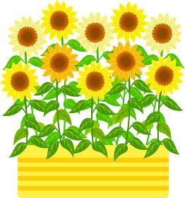 黄色の花壇に満開に咲いたひまわりのイラストアイコン