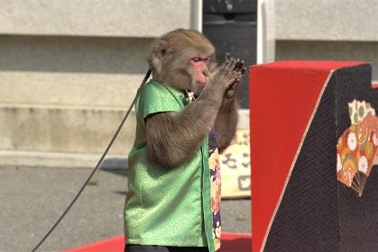 イベント会場で演技を披露する猿回し