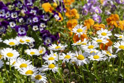 色とりどりに咲き乱れる花々