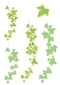 観葉植物:装飾-ヘデラ