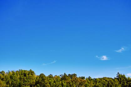 里山の木々の上に広がる順光の青い空 横長