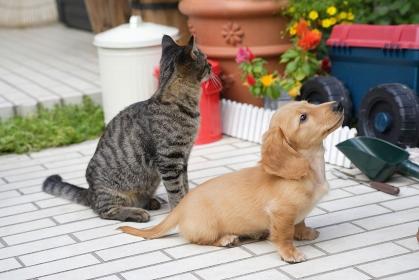 おすわりする仔犬と猫