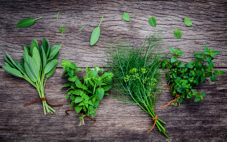 Various aromatic herbs and spices from garden fennel ,rosemary,oregano, sage and peppermint set up on old wooden background ..