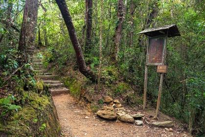 マレーシア・キナバル山登山道の風景