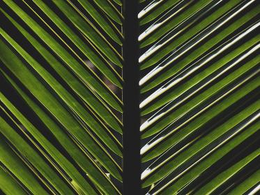 細い緑の葉と陰