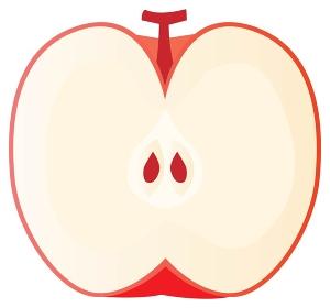 赤いリンゴの断面のイラスト