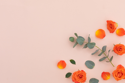 High angle view of orange roses and leaves on pink background. flower spring summer nature freshness copy space.