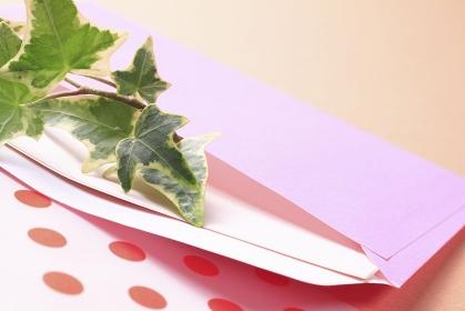 ピンクの封筒に入れた観葉植物