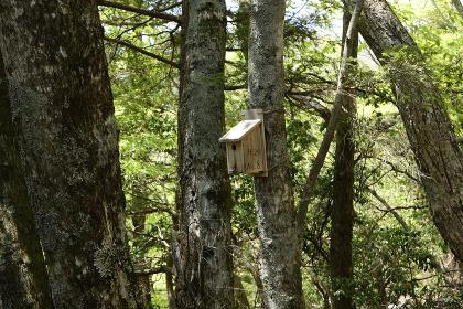 雲取山・登山路の巣箱