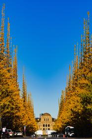 都内の観光名所:秋の神宮のイチョウ並木【東京都】【2019年撮影】