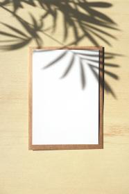 テーブルヤシの影と白いカード 10 縦位置