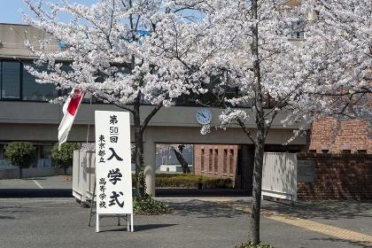 満開の桜が咲く入学式会場入口