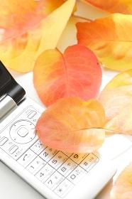 携帯電話と落葉
