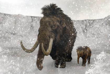 猛吹雪の中目的地に向かって移動するマンモスの親子