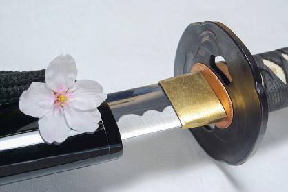 抜きかけの居合練習刀に桜の花びら
