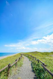 海沿いの草原と晴れた夏の空