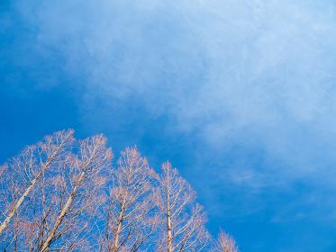 冬晴れの青空と冬枯れの木の風景 2月