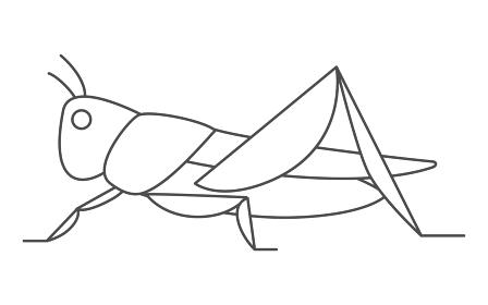 バッタ、昆虫食で食べられる昆虫