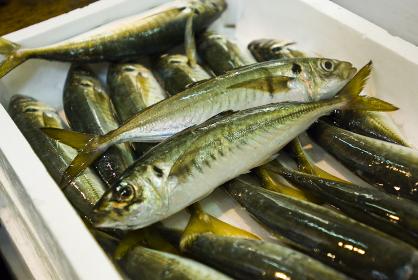 アジ 小豆島魚市場